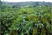Cần bán 2.3ha đất thôn 1, Đắk Wer, Đắk R'Lấp, Đắk Nông diện tích 23000m2 giá 1.8 tỷ