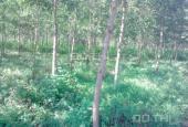 Bán đất Đơn Dương Lâm Đồng giá rẻ 138 ha 4,8 tỷ