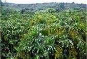 Bán trang trại tại Xã Đắk R'Moan, Gia Nghĩa, Đắk Nông. Diện tích 14000m2, giá 800 triệu
