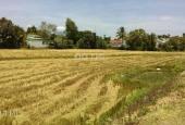 Bán 1700 m2 đất nông nghiệp đường Cao Bá Quát – Cầu Lùng giá rẻ. Lh 0935482102