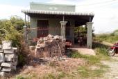 Cần bán 1250 trụ thanh long tại Hàm Kiệm, Hàm Thuận Nam, Bình Thuận