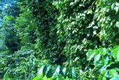 Bán rẫy cà phê Quảng Tiến, Cư M'gar 9300m2 giá 700 triệu