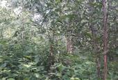 Kẹt tiền cần bán đất rừng trồng keo 2 năm tuổi tại Phú Yên với giá 40 triệu/1 ha