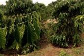 Bán trang trại thôn 4, thị trấn Quảng Khê, Dăk GLong, Đắk Nông, LH: 0963251012
