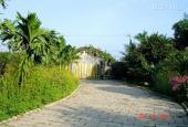 Định cư nước ngoài, bán gấp 1350m2 nhà vườn mặt tiền liên ấp 3-4, giá 2,5 tỷ Lưu tin