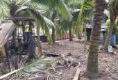Bán vườn dừa dứa rộng 15500m2, thu nhập 400tr/năm, SHR