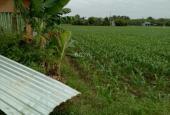 Cần bán lô đất vườn 1240m2 đất vườn, giá bán 1,5 triệu/m2