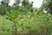 Bán gấp 1000m2 đất thổ vườn, Long An. Giá 700 nghìn/m2