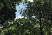 Bán vườn sầu riêng và măng cụt mặt tiền Sông Lu, xã Trung An, Củ Chi