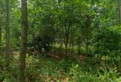 Cần bán lô đất cao su giá tốt tại huyện Cẩm Mỹ, tỉnh Đồng Nai