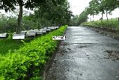Chính chủ bán đất cách xóm Miễu, cách Đại lộ Thăng Long 200m, đã có sổ đỏ thổ cư 100%