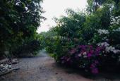 Cần bán vườn đã hoàn thiện, DT: 1.8 Ha, Giá 1,2 tr/m2, ở Xã Trung An – Củ Chi. LH 0931158176