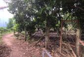 Đất vườn trái cây phường tân an, thủ dầu một, bình dương