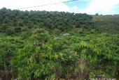 Đất nông nghiệp có sổ đỏ riêng Xã Đông Thanh, Lâm Hà, Lâm Đồng.