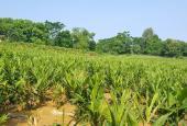 Cần sang nhượng gấp 5400m2 đất giá rẻ lại đẹp, tại Xã Liên Sơn, Lương Sơn, Hòa Bình.
