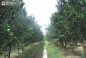 Bán gấp 4800m2 đất trồng cây nông nghiệp giá rẻ tại Long An