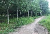 Đất cây cao su P. Tân An, Thủ Dầu Một, Bình Dương (2tr/m2)