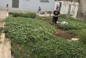 Bán đất sổ đỏ chính chủ vĩnh viễn 59m2, giáp Vin Ocen Park Kiêu Kỵ, Gia Lâm, HN