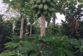 Bán đất rẫy đang thu hoạch năng suất cao tại Huyện Chư Sê, Gia Lai