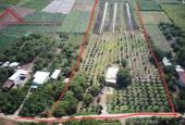 Đất vườn 15.000m2 tại Ấp Bình Hoà, xã Xuân Phú, Xuân Lộc, Đồng Nai, đường vào bê tông 6m ô tô vào