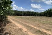 Bán đất nền dự án tại Xã Phước Bình, Long Thành, Đồng Nai diện tích 1000,61m2 giá 1,8 tỷ