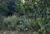 Bán lô đất Phú Cát, Quốc Oai, gần nhà máy In Tiền, DT 330m2, nhỉnh 1 tỷ. LH 0982.924.356