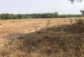 Chủ ngộp tiền cần ra gấp lô đất CLN, DT lớn xã Long Thọ, Nhơn Trạch