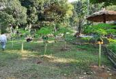 Bán 5000m2 nghỉ dưỡng nhà vườn đẹp như tranh giá rẻ tại Tiến Xuân, Thạch Thất, Hà Nội