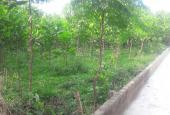 Cần bán đất thổ cư tại xã Nhuận Trạch, huyện Lương Sơn, Tỉnh Hoà Bình tiện làm khu nghỉ dưỡng