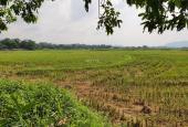 Bán gấp 2.144m2 đất thổ cư view cánh đồng tuyệt đẹp tại Lương Sơn, Hòa Bình