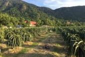 Bán trang trại 14.300m2 đất vườn sát khu du lịch Núi Tà Cú