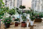 Bán CH sân vườn (Terrace) Đảo Kim Cương, Q2, 2 phòng ngủ, nội thất cao cấp, 53m2 sân vườn - 13,8 tỷ