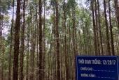 Cơ hội mới khởi đầu mới - đất rừng sản xuất