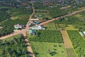 6000 m2 đất NN nguyên liệu ướp trà từ 730tr/năm, Bảo Lộc, ngay ngã 5 Phan Đình Phùng đi thác Đambri