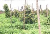 Cần bán lô đất rẫy xã Nâm N.Jang, Đăk Song, Đắk Nông, giá tốt