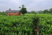 Bán đất Phú Cát, Quốc Oai, diện tích 2356m2, phân được 20 lô. Hai đường trước sau
