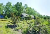 Bán đất 1.6 mẫu vườn trái cây cực mềm 535.000đ/m2, 8.5 tỷ xã Bình Hòa Nam, Đức Huệ, Long An