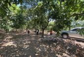 Bán đất Định Quán 310tr/sào, sổ riêng cá nhân, trồng cây ăn trái full đất
