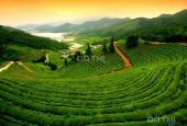 Sang nhượng dự án trang trại chăn nuôi tại Lâm Đồng