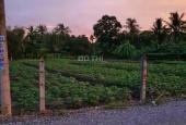 Ra miếng đất vườn Bình Mỹ, Củ Chi 33x38m 6tr/m2 1 sẹc Tỉnh Lộ 9