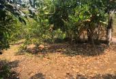 Bán miếng vườn trồng cây ăn quả 1039m2 giá 350tr
