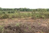 Đất mẫu chính chủ 26.000m2 mặt tiền đường nhựa tại xã Lộc Khánh, Lộc Ninh, Bình Phước giá đầu tư