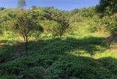 Bán đất Cao Phong 1,4ha có 1000m2 thổ cư giá chỉ 157nghìn/m2