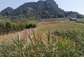 Bán 5ha 400m2 đất thổ cư còn lại là đất vườn. Phẳng như thảo nguyên tại Kim Bôi - Hoà Bình