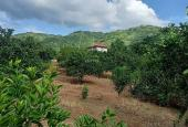 Chỉ với hơn 3 tỷ có ngay 8.000m2 đất thổ cư siêu đẹp tại Cao Phong, Hòa Bình