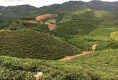 Kẹt tiền cần bán đất siêu đẹp view núi Sa - pung, thôn 11 Đại Lào, Bảo Lộc
