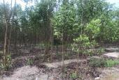 Bán đất 5.3 hecta Thôn Phước Tiến - Tân Phước - Tx LaGi giá mùa dịch