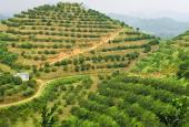 Chuyển nhượng 10.89ha đất rừng sản xuất rẻ đẹp tại Cao Phong, Hòa Bình