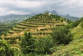 Cần chuyển nhượng 10.89ha đất rừng sản xuất rẻ đẹp tại Cao Phong, Hòa Bình