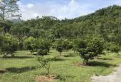 Cần bán 6.4ha đất phù hợp làm trang trại khu nghỉ dưỡng tại Kỳ Sơn, Hòa Bình
